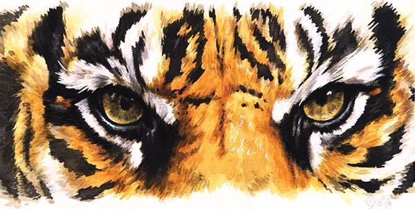 Olho de tigre