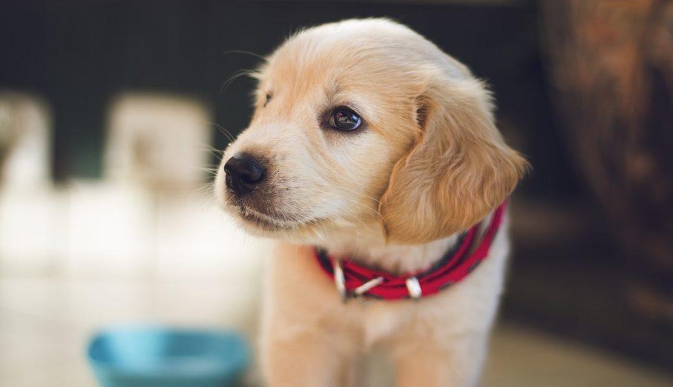 Acostumar cachorro nome e1521664878133