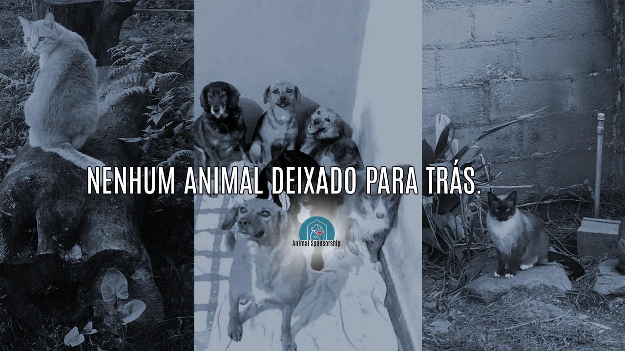 4nehum animal deixado para tr%c3%a1s